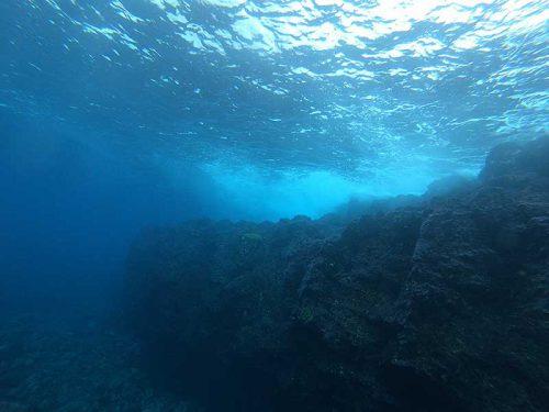 岸近くの壁沿いにはちっこいアオウミガメ
