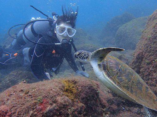 ちっこいウミガメ近くで見たり