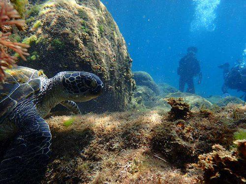 岩陰隠れるウミガメ見かけ