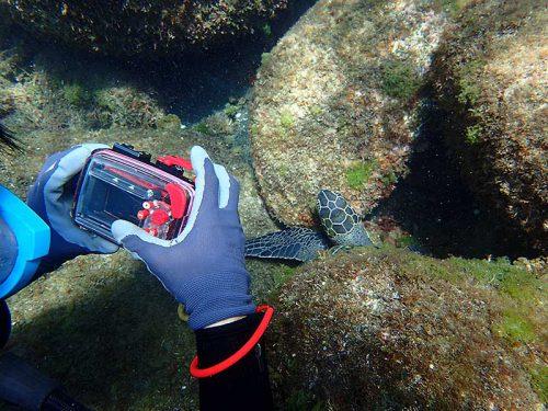 ウミガメ近くで撮ってみて