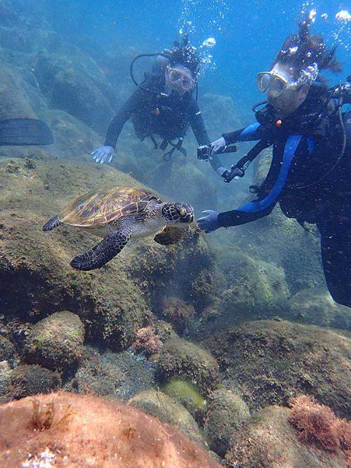 泳ぐウミガメみんなで眺め