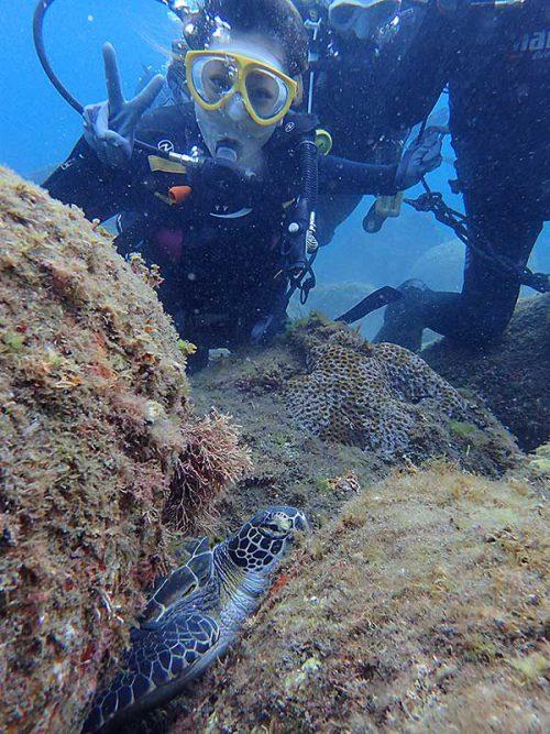 隙間で休むちっこうウミガメ見てみたり