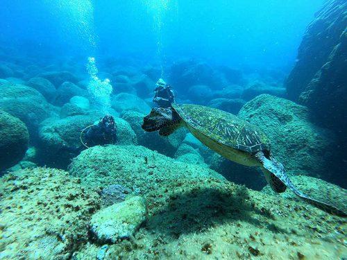 潮を避けつつウミガメ見たり
