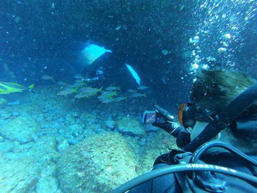 アーチの下には魚もたくさん集まっていて