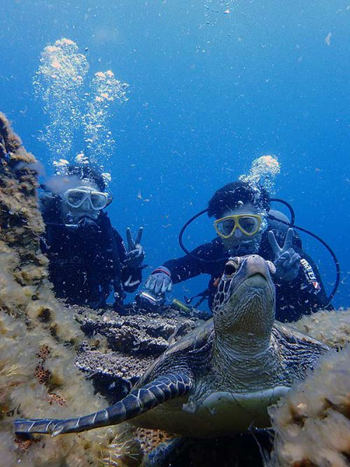 根上で休憩してたアオウミガメ