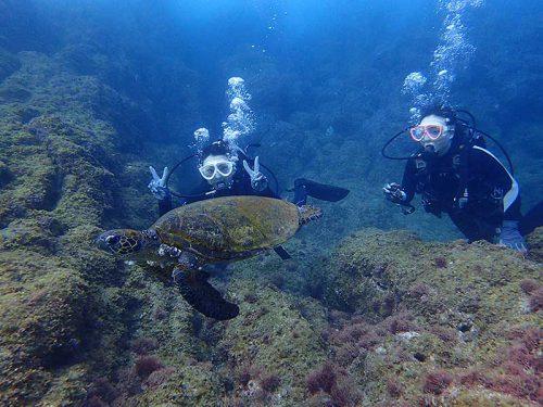 少し沖出てウミガメと一緒に泳いでみたり