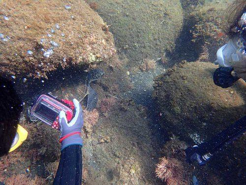 岩陰潜むウミガメ見かけ