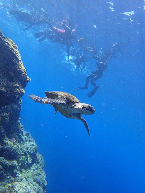ちょっと泳げばウミガメ見かけ