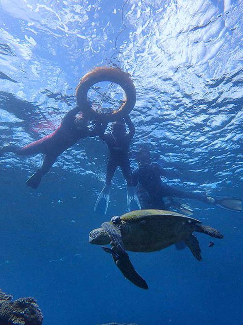 ウミガメ見ながらシュノーケリング