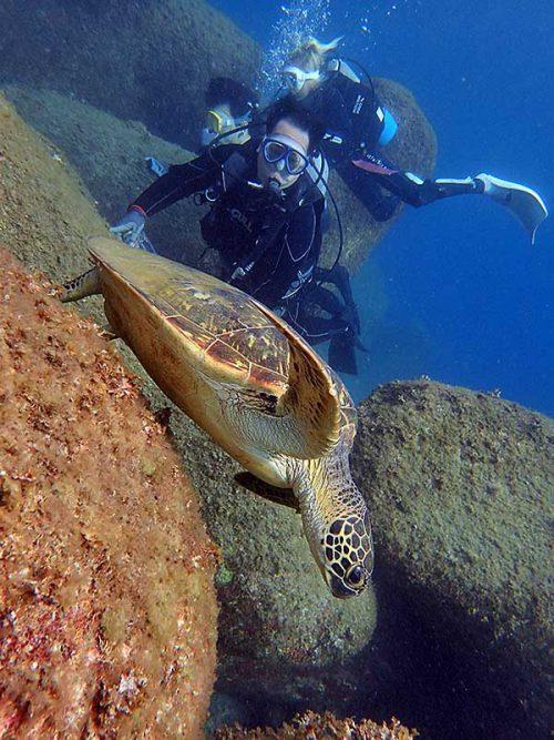 戻り際にもウミガメ見て行き