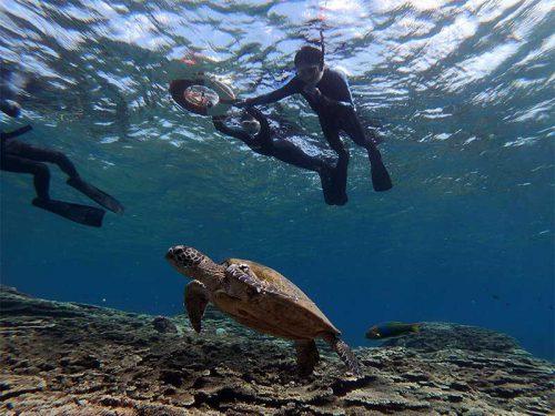ゆっくり近づきウミガメ眺め