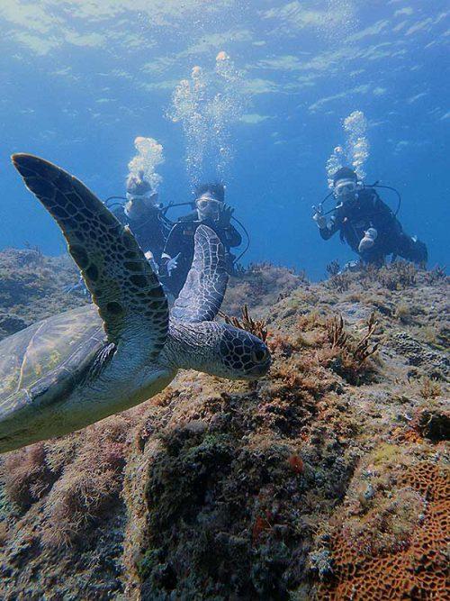 ちょっと沖にはウミガメ泳いでおりまして
