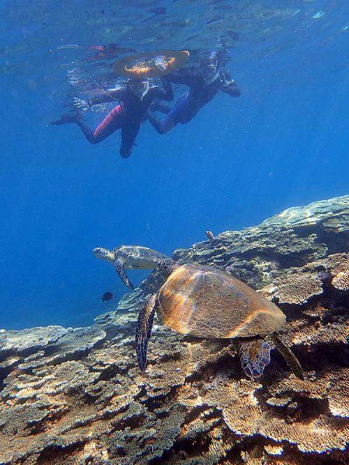 上からウミガメじっくり眺め