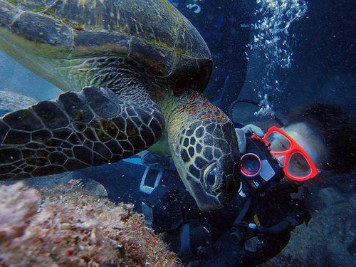 間近でウミガメ撮ってみて