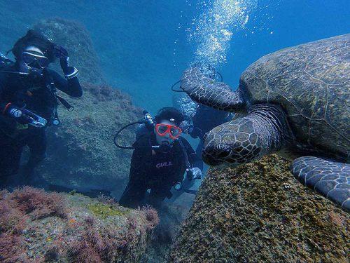 近くでウミガメ見てみたり