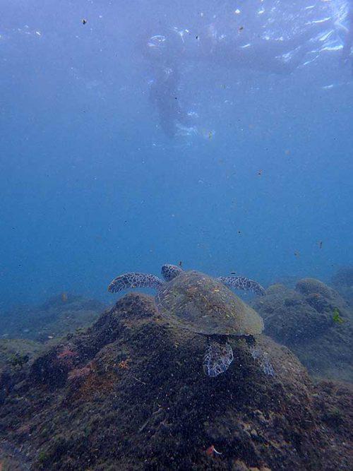 ウミガメ上から眺めてみたり