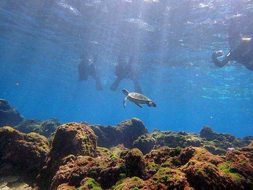 ちっこいウミガメみんなで眺め