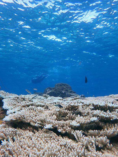 サンゴの上にはコガシラベラとかクギベラとか