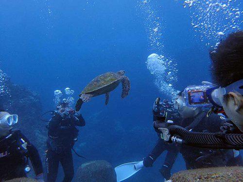 みんなでウミガメ撮ってみて