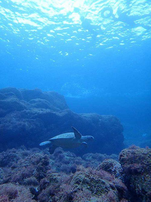 沖出てウミガメ上から眺め