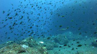 青空広がる八丈島、概ね穏やかなナズマドで【ダイビング】