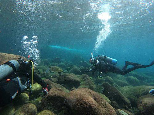 浅場でウミガメ見てみたり
