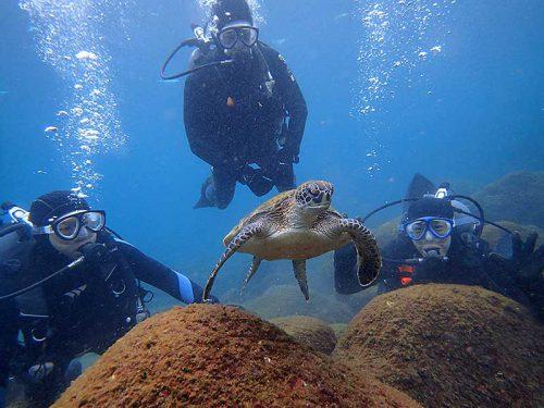 みんなでウミガメ見ながら潜り