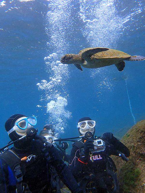 ちっこいウミガメ泳いできたり
