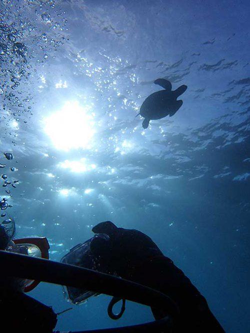 見上げる上にはウミガメ泳ぎ