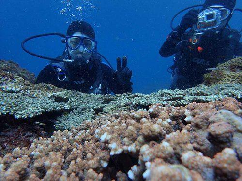 サンゴの上にはコガシラベラの子ども達