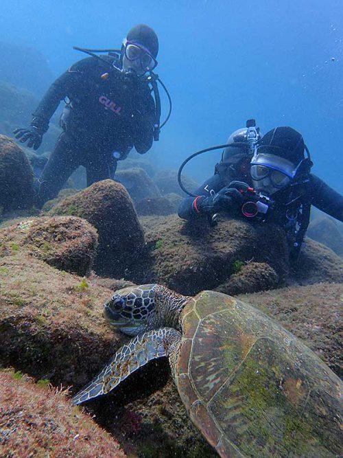 近くでウミガメ見たり撮ったりして頂き