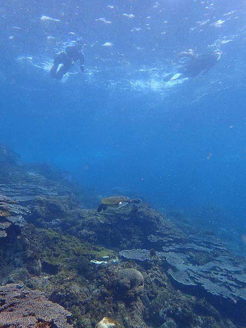 ちっこいウミガメ泳いでいたり