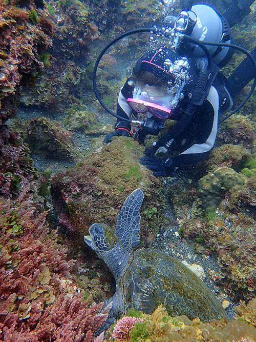もぐもぐ海草食べてたアオウミガメ