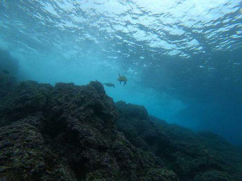 波打ち際にはアオウミガメ
