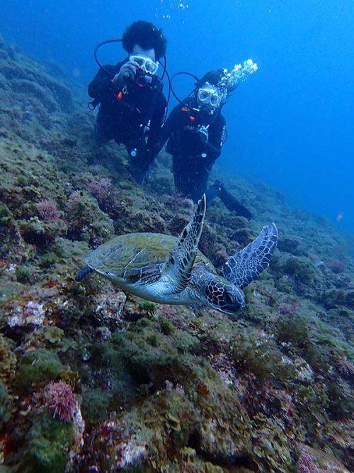 泳ぐウミガメ撮ったり見たり