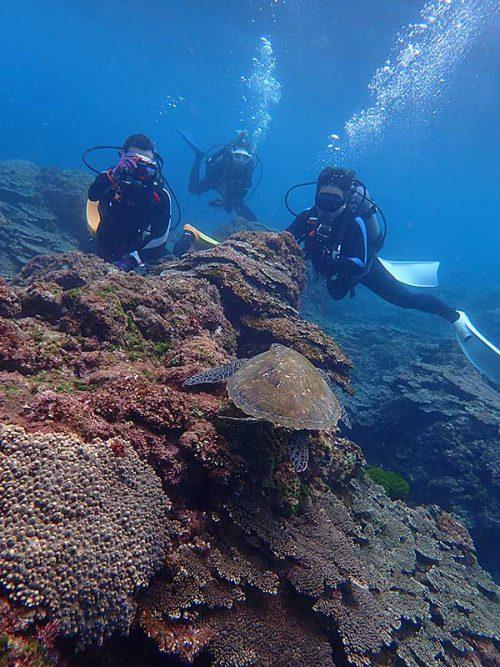 小さいウミガメみんなで見たり
