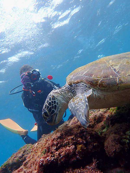 海草食べてるウミガメ撮ったり