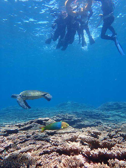 ヤマブキベラとアオウミガメ