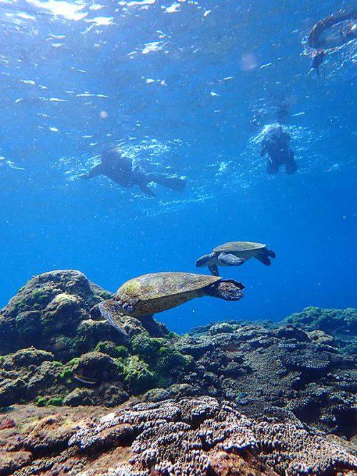 集まるウミガメのんびり眺め