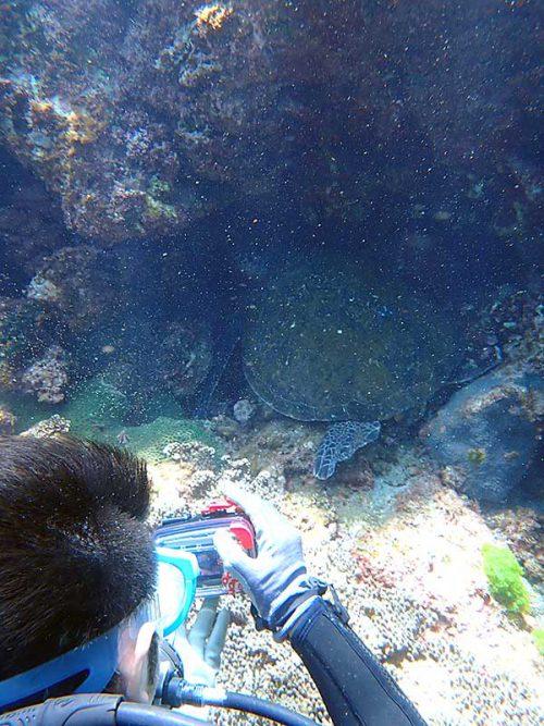 岩の隙間で休憩していたアオウミガメ
