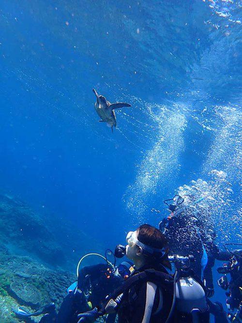 ウミガメ下から眺めてみたり