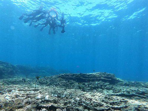 サンゴの上に集まるちっこい魚達と上から眺め