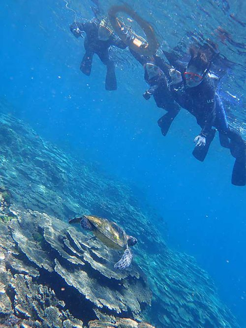 真下をウミガメ泳いで行って
