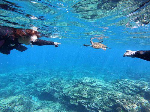 呼吸をしに水面に上がってきてたアオウミガメ