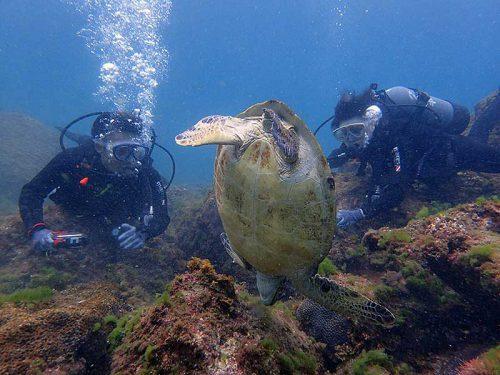 夢中で海草食べてたアオウミガメ