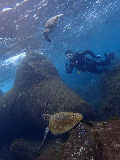 浅場で集まるウミガメ見たり