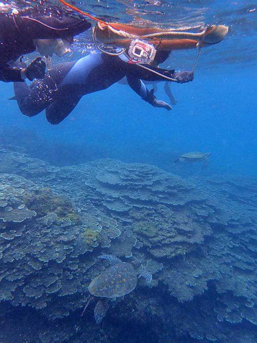そこそこ集まるウミガメ達をみんなで眺め
