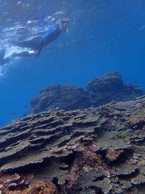 サンゴの上に集まるちっこい魚達とか