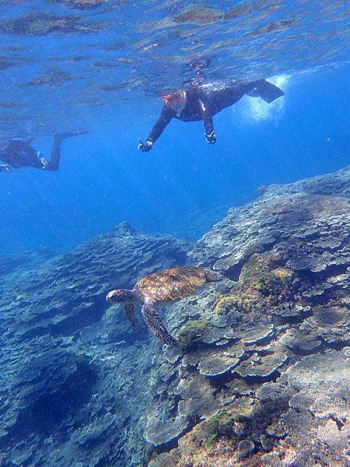上からウミガメ見て周り