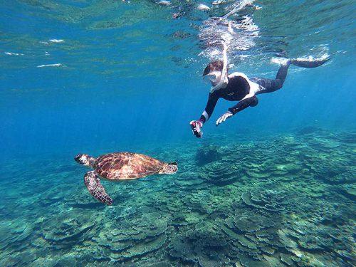 泳ぐウミガメ見ながら周り
